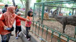 Warga melihat rusa di Kebun Binatang Ragunan, Jakarta, Minggu (27/12/2015). Ragunan masih menjadi tempat favorit untuk rekreasi bagi warga ibukota dan sekitarnya. (Liputan6.com/Helmi Afandi)