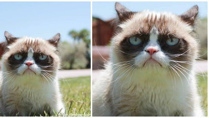 Unduh 80+  Gambar Kucing Editan Terlihat Keren HD