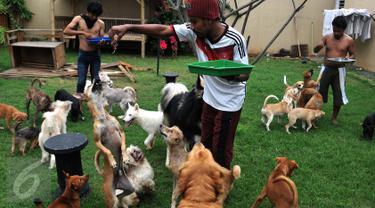 Sebuah rumah di perumahan Ganda Asri 2, Tangerang, riuh dengan suara gonggongan puluhan ekor anjing yang terdapat di dalamnya. Para anjing dan kucing di rumah itu tampak terawat dan memberi kesan ramah terhadap tamu yang datang. (Liputan6.com/Johan Tallo)
