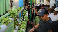 Warga Kampung Simorejo, Kelurahan Simomulyo, Kecamatan Sukomanunggal, Surabaya panen beragam sayuran yang ditanam dengan cara hidroponik. (Foto: Liputan6.com/Dian Kurniawan)