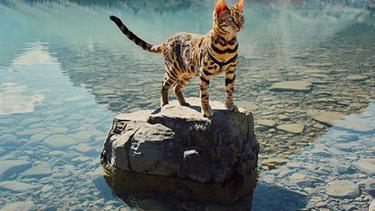 Pesona Suki Kucing Bengal Suka Traveling Dari Kanada Fashion Fimela Com