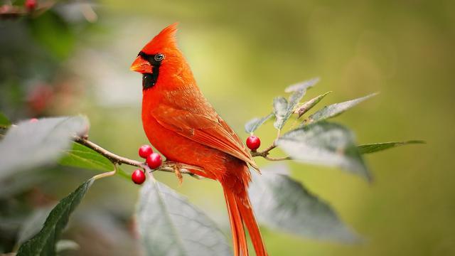 Jenis Burung Pemakan Jangkrik
