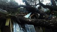 Angin kencang disertai hujan lebat mengakibatkan sejumlah pohon tumbang di Pulau Flores dan wilayah sekitarnya. (Liputan6.com/Ola Keda)