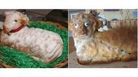 Ekspektasi vs realita kue (Sumber:buzzfeed)