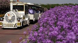 Para pelancong menaiki kereta wisata di tengah bunga-bunga yang bermekaran di Taman Hutan Gunung San Tai di Kota Suqian, Provinsi Jiangsu, China timur, pada 13 Mei 2020. (Xinhua/Han Yuqing)
