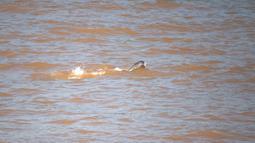Seekor lumba-lumba tak bersirip berenang di Sungai Yangtze di Yichang, Provinsi Hubei, China tengah, pada 3 Agustus 2020. Lumba-lumba tak bersirip, spesies endemik di China, menjadi indikator penting untuk ekologi Sungai Yangtze. (Xinhua/Lei Yong)