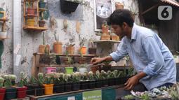 Pembudidaya tanaman hias merawat kaktus di Rumah Kaktus, Kota Tangerang, Banten, Jumat (2/4/2021). Tanaman hias di tempat ini dikirim hingga ke luar negeri untuk kebutuhan cendera mata dan hiasan rumah. (Liputan6.com/Angga Yuniar)