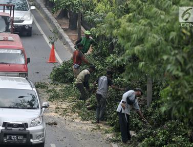 Antisipasi Tumbang, Dinas Kehutanan Jakarta Timur Tebang Pohon Pinggir Jalan