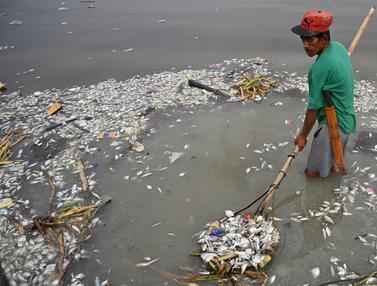 Diduga Tercemar, Teluk Manila Sebabkan Ribuan Ikan Mati