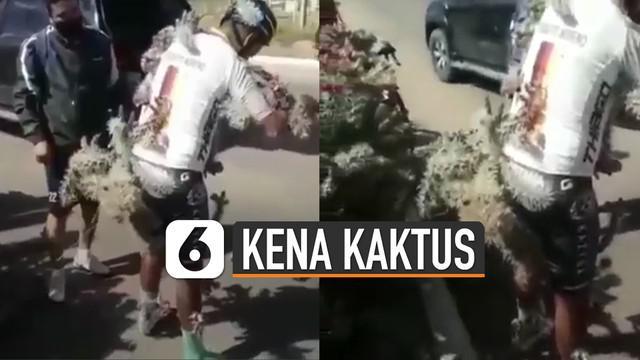 Nasib apes dialami oleh pesepeda yang satu ini. Karena menabrak tanaman kaktus dipinggir jalan membuat sekujur tubuhnya dipenuhi oleh kaktus tersebut.