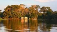 Ilustrasi Hutan Amazon, Brasil. (dok. unsplash @splashabout)