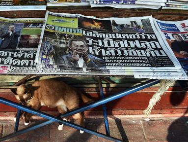 Seekor kucing bersantai di bawah kios koran yang menampilkan surat kabar dengan berita utama berisi insiden jatuhnya helikopter pemilik klub Liga Inggris Leicester City, Vichai Srivaddhanaprabha di Bangkok, Senin (29/10). (Lillian SUWANRUMPHA/AFP)