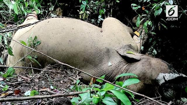 Seekor gajah jantan ditemukan mati diracun di sebuah area konservasi. Gajah ditemukan mati dengan satu gading hilang.