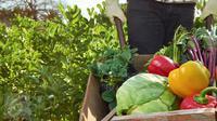 Berikut cara unik untuk membuat sayur dan buah agar tahan lebih lama.