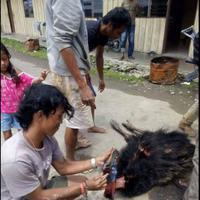 Netizen semakin dibuat geram karena selain kucing hutan kini banyak pembunuh satwa liar yang juga membunuh burung kasuari.
