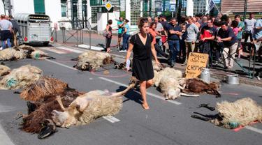Seorang wanita berjalan melewati domba-domba yang mati oleh serangan beruang di sub-prefektur Bayonne, Prancis, Senin (2/9/2019). Petani memprotes meningkatnya serangan beruang terhadap kawanan domba di pegunungan Pyrenees. (AP Photo Bob Edme)
