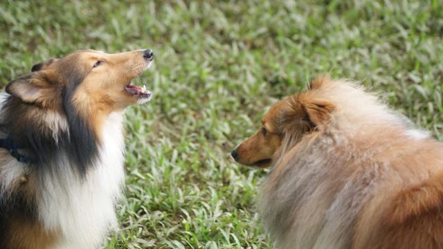 Setiap Gonggongan Anjing Punya Makna - Health Liputan6 com