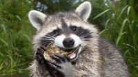 Apa kelebihan hewan ini dibanding manusia?