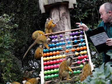 Petugas menghitung jumlah monyet tupai saat melakukan sensus di Kebun Binatang ZSL London, Inggris, Kamis (3/1). Sensus tahunan ini wajib dilakukan sebagai persyaratan izin kebun binatang. (Adrian DENNIS/AFP)