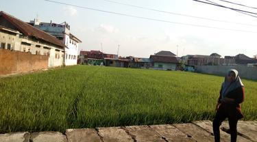 Lahan Pertanian di Kota Malang