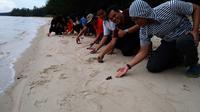 Sejumlah wisatawan tengah melepaskan penyu sisik ke laut lepas di Tanjung Keluang, Kotawaringin Barat, Kalteng. (Liputan6.com/Rajana K)