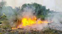 Kebakaran lahan di Pekanbaru mengepulkan kabut asap yang mulai mendekati pemukiman warga. (Liputan6.com/M Syukur)