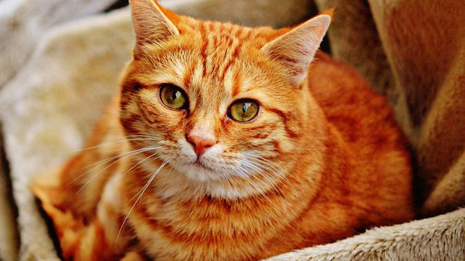 Jangan Salah Begini Tips Dan Langkah Langkah Tepat Memandikan Kucing Citizen6 Liputan6 Com