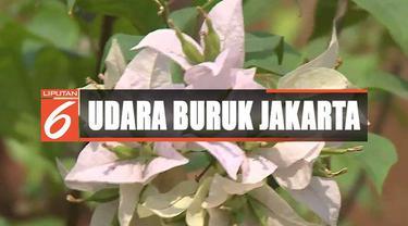 Atasi udara buruk di ibu kota, Pemprov DKI Jakarta menanam 100 ribu bougenville di sepanjang Jalan Sudirman-MH Thamrin.