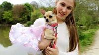 Hobi Dandani Anjing, Wanita Ini Habiskan Uang Rp 172 Juta (foto: metro.co.uk)