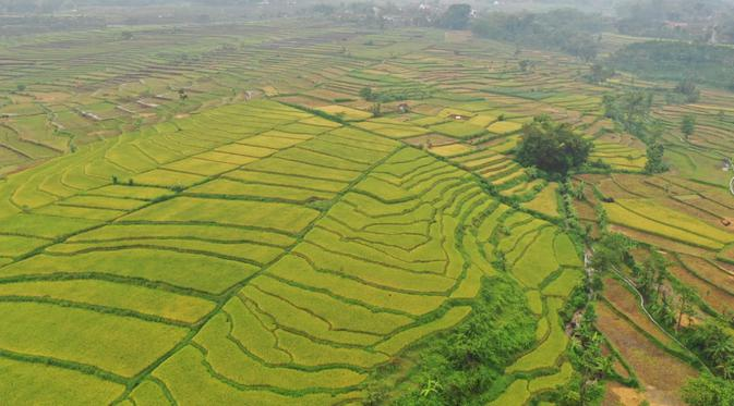 Alih Fungsi Lahan Pertanian Jadi Masuk Ranah Pidana - Bisnis Liputan6.com