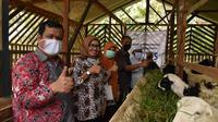 PLN UID Banten melalui CSR PLN, kucurkan Rp 200 juta untuk memberdayaan masyarakat usaha berkelanjutan yang dimulai dengan peternakan domba. (Dok PLN)
