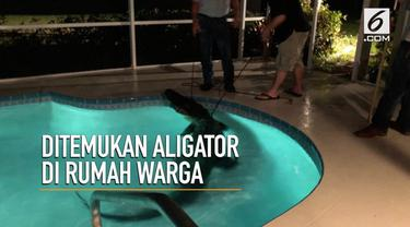 Seekor aligator sepanjang 3 meter ditemukan berenang tengah malam di rumah warga di Florida, AS.