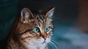 Gli, kucing di Hagia Sophia