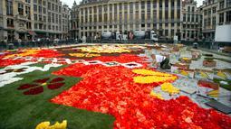 Seorang sukarelawan menata Karpet Bunga Brussels di Grand Place, Brussels, Belgia, Kamis (16/8). Karpet Bunga Brussels bertema Amerika Latin. (AP Photo/Virginia Mayo)