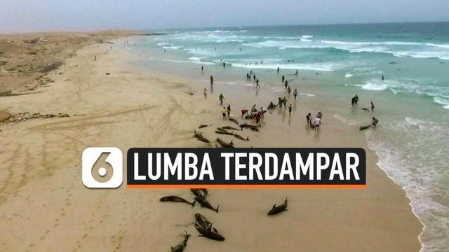 Ratusan ekor lumba-lumba terdampar di pinggir pantai kepulauan Cape Verde, Afrika Barat. Belum diketahui penyebab kematian ratusan mamalia laut tersebut.Para ahli masih menyelidiki.