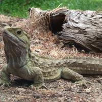 Bintang 5 kali ini akan menghadirkan informasi tentang reptil terbesar, pembunuhan sadis, dan ular mati karena mangsanya sendiri. (Foto: static.panoramio.com)