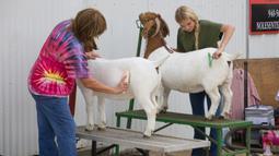 Sejumlah orang membersihkan kambing mereka sebelum penyelenggaraan sebuah kontes dalam Pameran dan Rodeo Texas Utara 2020 di Denton, Texas, 22 Oktober 2020. Pameran dan Rodeo Texas Utara digelar pada 16-24 Oktober dengan menampilkan pertunjukan ternak, kontes, rodeo, serta karnaval (Xinhua/Dan Tian)