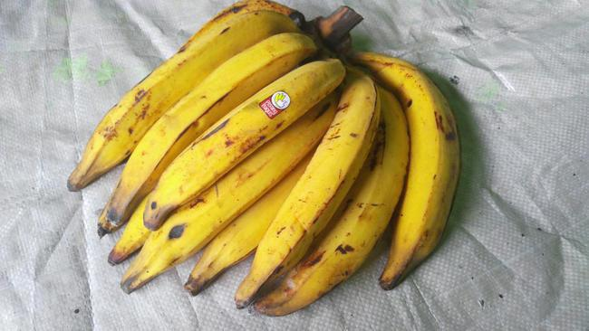Pisang tanduk/Copyright bukalapak.com/u/pisangbagus