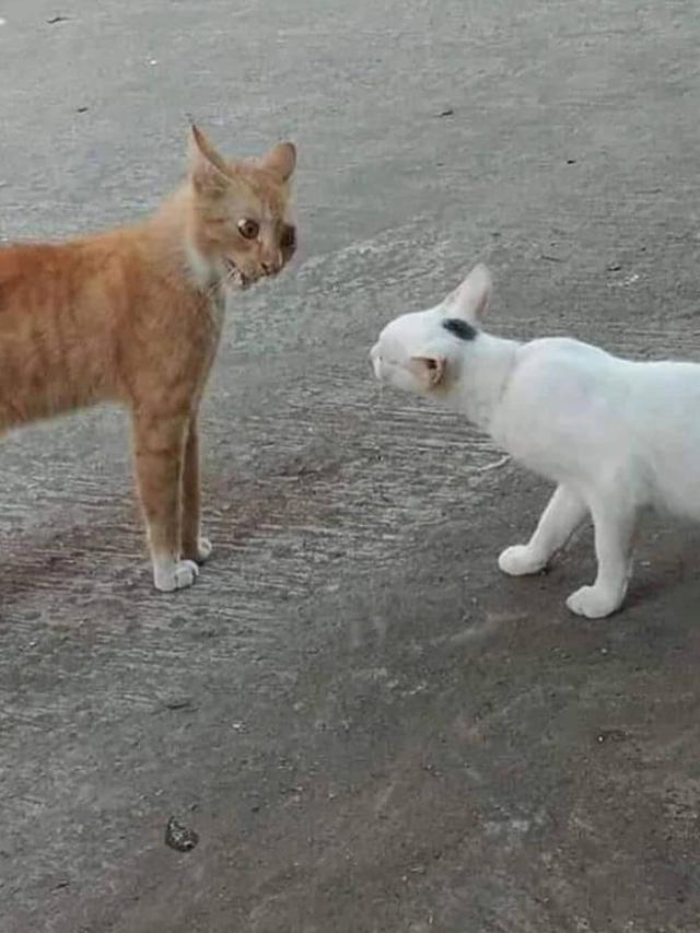 Download 98+  Gambar Kucing Oren Terlihat Keren