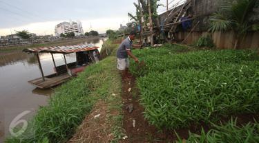Warga bercocok tanam di bantaran Kanal Banjir Barat, Jakarta, Rabu (29/3). Meskipun dengan kondisi seadanya, namun warga di kawasan tersebut tetap memanfaatkan bantaran KBB untuk bercocok tanam. (Liputan6.com/Immanuel Antonius)