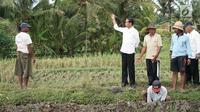 Presiden Jokowi  meninjau pelaksanaan padat karya di Desa Kukuh, Kecamatan Marga, Tabanan, Bali, Jumat (23/2). Nilai proyek yang dianggarkan untuk pembangunan jalan produksi sepanjang 592 meter tersebut Rp 600 juta. (Liputan6.com/Pool/Biro Pers Setpres)