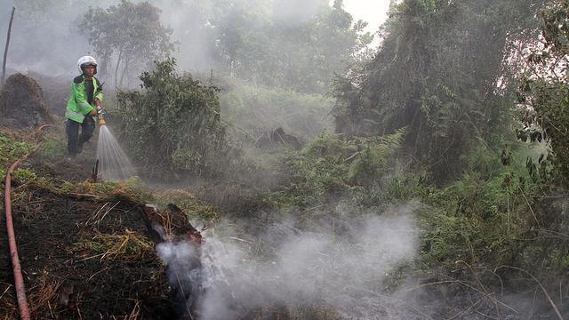 kebakaran hutan Jambi