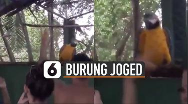 Burung itu nampak menggerak-gerakan badannya ke kiri dan ke kanan.