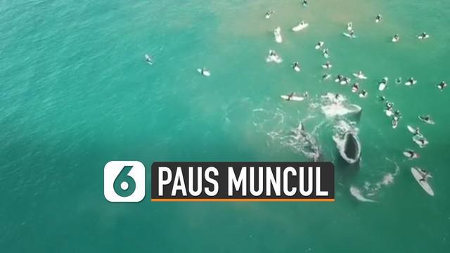 Sedang asyik berselancar, wisatawan ini bertemu dengan dua paus yang sedang berenang di atas permukaan laut.