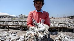 Pekerja memperlihatkan ikan asin  yang sedang dikeringkan di wilayah kampung nelayan Muara Angke, Jakarta, Senin (3/8/2015). Musim kemarau membuat produksi ikan asin di daerah tersebut meningkat 50 persen. (Liputan6.com/Faizal Fanani)