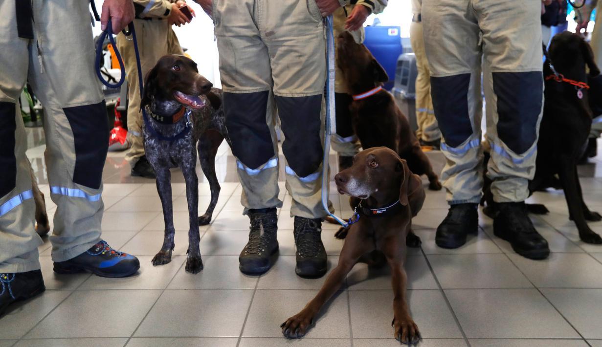 Anggota tim SAR Ceko beserta anjing pelacak tiba di bandara Vaclav Havel di Praha, Rabu (5/8/2020). Republik Ceko mengirimkan sekitar 37 personel dan lima ekor anjing pelacak untuk membantu pencarian korban ledakan dahsyat di Beirut, Lebanon. (AP Photo/Petr David Josek)