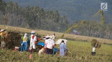 Sejumlah petani melakukan panen padi di sawah Desa Bube Baru, Kecamatan Suwawa, Kabupaten Bone Bolango, Gorontalo, Jumat (15/3). Mereka lebih memilih menggunakan tenaga manual untuk melakukan panen. (Liputan6.com/Arfandi Ibrahim)