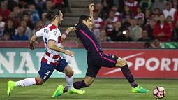 Striker Barcelona, Luis Suarez, berusaha melewati bek Granada, Gaston Silva. Meskipun pada pertandingan tersebut Blaugrana tampil tanpa Messi, namun tetap bermain menyerang. (EPA/Pepe Torres)