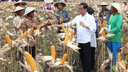 Presiden Joko Widodo (Jokowi) berdialog dengan petani saat panen raya jagung di Perhutanan Sosial, Ngimbang, Tuban, Jawa Timur, Jumat (9/3). Di sela acara itu, Jokowi juga menyerahkan 13 Surat Keputusan Perhutanan Sosial. (Liputan6.com/Angga Yuniar)