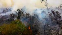 Api melumat lahan kosong di Provinsi Riau dan sudah mengepulkan asap tebal. (Liputan6.com/M Syukur)